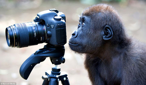 In cosa si distingue un Fotoamatore (o Fotografo Dilettante) da un Fotografo Professionista?