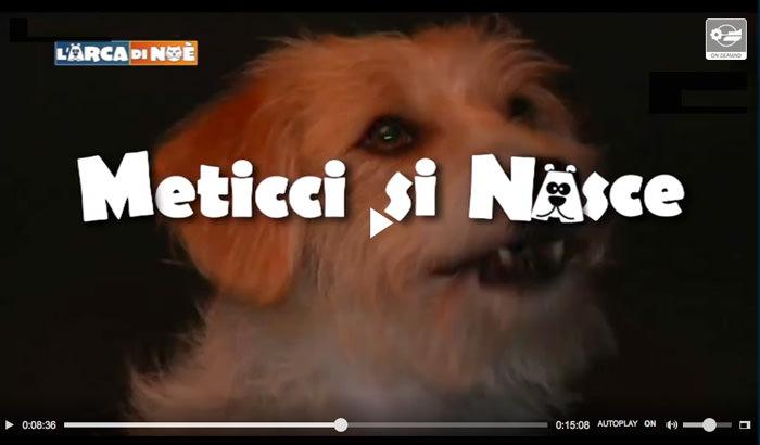 Foto di cani meticci - Calendario