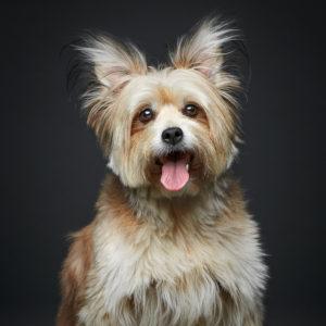 belle foto di cani