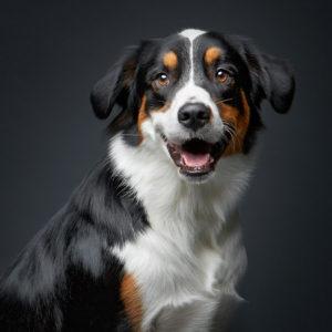 Una (a caso) delle foto di cani bellissimi