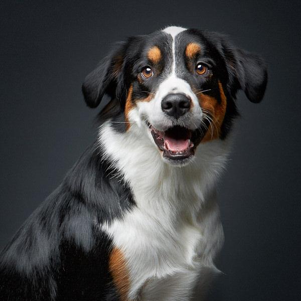 Come fare belle foto di cani bellissimi. Un servizio fotografico dedicato agli animali più amati.