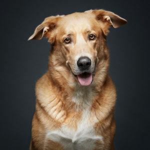 Galleria Fotografica con Foto di cani in posa