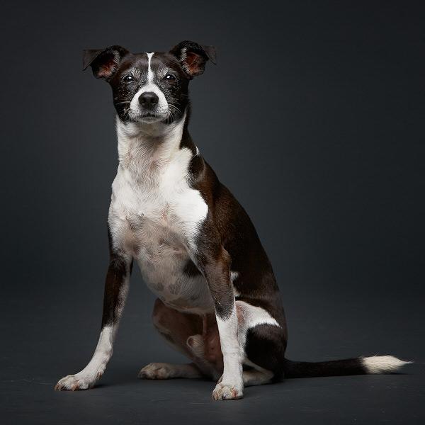 Belle Foto di Cani Belli